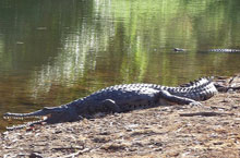 Crocodile, Windjana Gorge, Kimberleys, Australie